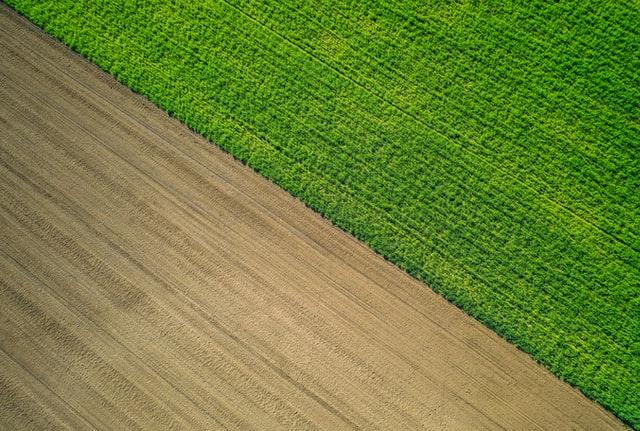 Czym jest skracanie zbóż?